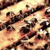 養蜂に夢中なベースヒーロー、レッチリのフリーの魅力を改めて考えてみた